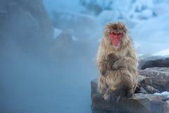 τώρα πίθηκος Macaque Onsen Στοκ Εικόνες
