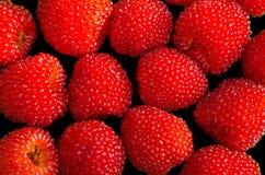 Υβρίδιο των σμέουρων και των φραουλών Στοκ Φωτογραφίες