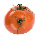 υβριδική ντομάτα Στοκ φωτογραφία με δικαίωμα ελεύθερης χρήσης