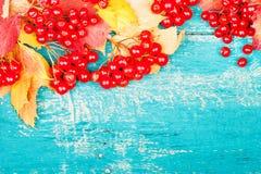 Υγεία τσαγιού με το viburnum Στοκ εικόνα με δικαίωμα ελεύθερης χρήσης