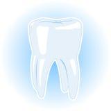 υγιές δόντι απεικόνισης απεικόνιση αποθεμάτων