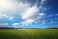 Υγιές και πράσινο cropfield κατά τη διάρκεια νωρίς Στοκ Εικόνα