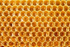 Υγιές μέλι μελισσών τροφίμων στην κηρήθρα Στοκ εικόνα με δικαίωμα ελεύθερης χρήσης
