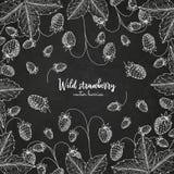 Υγιές πρότυπο σχεδίου τροφίμων με τα μούρα Συρμένο χέρι πλαίσιο με την άγρια φράουλα Πρότυπο καλοκαιριού ή φθινοπώρου επάνω Στοκ εικόνα με δικαίωμα ελεύθερης χρήσης