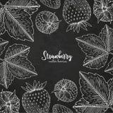 Υγιές πρότυπο σχεδίου τροφίμων με τα μούρα Συρμένο χέρι πλαίσιο με τη φράουλα Πρότυπο καλοκαιριού ή φθινοπώρου στον πίνακα κιμωλί Στοκ Εικόνα