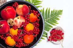 Υγιές ροδάκινο θερινών φρούτων έννοιας τροφίμων, βερίκοκο και κόκκινο curran Στοκ Εικόνες