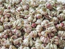 Υγιές σχέδιο βολβών garlics Backgound Στοκ Εικόνες