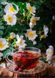 Υγιές τσάι με ένα dogrose σε έναν ξύλινο πίνακα Εκλεκτική εστίαση Στοκ εικόνες με δικαίωμα ελεύθερης χρήσης