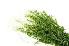 Υγιές υπόβαθρο κατανάλωσης Λαχανικά φωτογραφίας τροφίμων που απομονώνονται Στοκ φωτογραφία με δικαίωμα ελεύθερης χρήσης