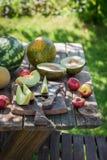 Υγιής διάφορος των νωπών καρπών στον κήπο Στοκ Εικόνες