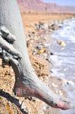 Υγιής λάσπη της νεκρής θάλασσας στοκ φωτογραφία με δικαίωμα ελεύθερης χρήσης