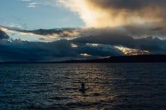 Υγιής λεκάνη Puget Στοκ Εικόνες