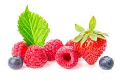 Υγιής ομάδα μούρων τροφίμων Μακρο πυροβολισμός των φρέσκων σμέουρων, των βακκινίων και της φράουλας με τα φύλλα που απομονώνονται Στοκ φωτογραφίες με δικαίωμα ελεύθερης χρήσης