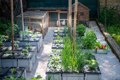 Υγιής οργανικός τρόπος ζωής κατανάλωσης και ικανότητας υποστήριξης Ελεύθερες ωοτόκες όρνιθες αυγών σειράς και homegrown λαχανικά στοκ εικόνες