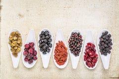 Υγιής συλλογή μούρων superfruit Στοκ Εικόνες