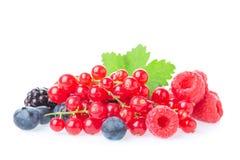 Υγιής φρέσκια ομάδα μούρων τροφίμων Μακρο πυροβολισμός των φρέσκων σμέουρων, των βακκινίων, των βατόμουρων, της κόκκινης σταφίδας Στοκ Φωτογραφίες