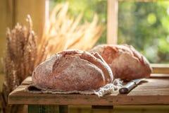 Υγιής φραντζόλα του ψωμιού με το σιτάρι και τα αυτιά στοκ εικόνες με δικαίωμα ελεύθερης χρήσης