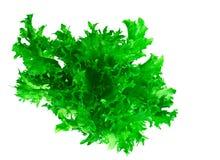 Υγιή και τρόφιμα διατροφής: πράσινη σαλάτα που απομονώνεται στο άσπρο υπόβαθρο Στοκ Φωτογραφία