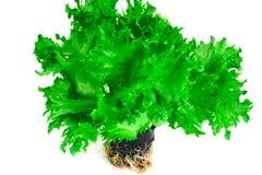 Υγιή και τρόφιμα διατροφής: πράσινη σαλάτα που απομονώνεται στο άσπρο υπόβαθρο Στοκ εικόνα με δικαίωμα ελεύθερης χρήσης