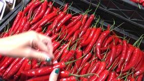 Υγιή οργανικά τσίλι στην αγορά τροφίμων στην Ασία Φρέσκο chillie Χέρι γυναικών που επιλέγει το οργανικό λαχανικό chillie απόθεμα βίντεο