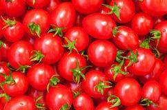 Υγιή τρόφιμα, ανασκόπηση. Ντομάτα Στοκ Εικόνα