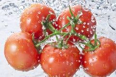 Υγιή τρόφιμα ψεκασμού νερού ντοματών Στοκ φωτογραφία με δικαίωμα ελεύθερης χρήσης