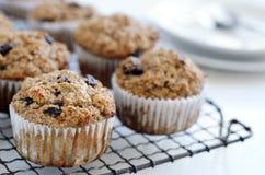 Υγιή muffins πίτουρου στην ψύξη του δίσκου Στοκ φωτογραφία με δικαίωμα ελεύθερης χρήσης