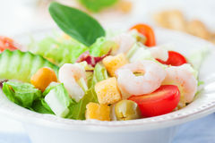 υγιείς γαρίδες σαλάτας Στοκ εικόνα με δικαίωμα ελεύθερης χρήσης