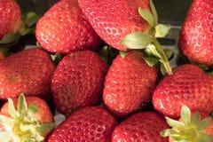 Υγιείς εύγευστες φράουλες Στοκ Εικόνα