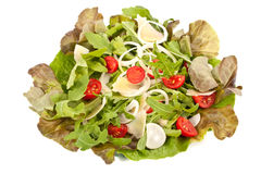 υγιείς ντομάτες σαλάτας Στοκ φωτογραφία με δικαίωμα ελεύθερης χρήσης