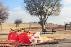 υγιείς οργανικές ντομάτες τροφίμων Στοκ εικόνες με δικαίωμα ελεύθερης χρήσης