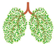 υγιείς πνεύμονες Στοκ φωτογραφία με δικαίωμα ελεύθερης χρήσης