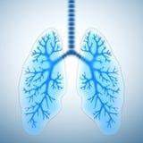 υγιείς πνεύμονες Στοκ εικόνα με δικαίωμα ελεύθερης χρήσης