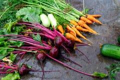 Υγρά λαχανικά σε μια σκοτεινή επιφάνεια Στοκ φωτογραφία με δικαίωμα ελεύθερης χρήσης
