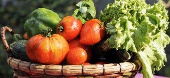 Υγρά λαχανικά στον πίνακα Στοκ Φωτογραφία