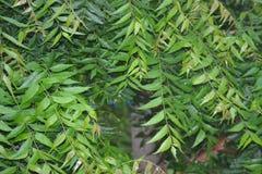 Υγρά και λαμπρά φύλλα Στοκ εικόνα με δικαίωμα ελεύθερης χρήσης