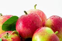 Υγρά μήλα κινηματογραφήσεων σε πρώτο πλάνο που απομονώνονται στο άσπρο υπόβαθρο στοκ φωτογραφίες