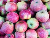 Υγρά μήλα στο ράφι Στοκ φωτογραφία με δικαίωμα ελεύθερης χρήσης