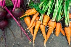 Υγρά τεύτλα και καρότα στο υγρό έδαφος Στοκ Φωτογραφίες