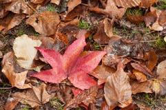 Υγρά φθινοπωρινά φύλλα που αφορούν το πάτωμα στην αστική ισοτιμία στοκ εικόνα