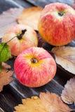 Υγρά φρέσκα κόκκινα μήλα στον κήπο Στοκ Φωτογραφία