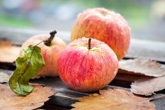 Υγρά φρέσκα κόκκινα μήλα στον κήπο Στοκ εικόνες με δικαίωμα ελεύθερης χρήσης
