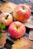 Υγρά φρέσκα κόκκινα μήλα στον κήπο Στοκ Εικόνα