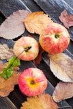 Υγρά φρέσκα κόκκινα μήλα στον κήπο Στοκ εικόνα με δικαίωμα ελεύθερης χρήσης