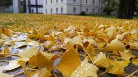 Υγρά φύλλα κοντά σε ένα σχολικό φθινόπωρο Στοκ φωτογραφία με δικαίωμα ελεύθερης χρήσης