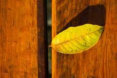 Υγρά φύλλα στον πάγκο Στοκ εικόνες με δικαίωμα ελεύθερης χρήσης