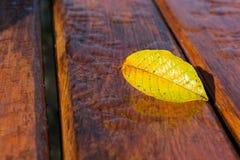 Υγρά φύλλα στον πάγκο Στοκ Εικόνα