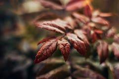 Υγρά φύλλα του άγνωστου Μπους Στοκ εικόνες με δικαίωμα ελεύθερης χρήσης