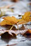 Υγρά φύλλα φθινοπώρου στοκ φωτογραφία με δικαίωμα ελεύθερης χρήσης