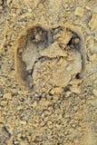 Υγρή άμμος παραλιών με την τυπωμένη ύλη οπλών ταύρων Στοκ εικόνα με δικαίωμα ελεύθερης χρήσης